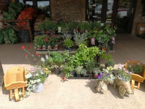 Plants and compost at Barleymows Farm Shop