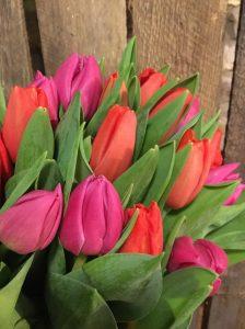 Bunch of tulips near Chard